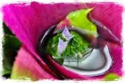 photoforgephoto-1