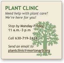 plant_clinic_winter