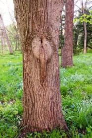 Atala-Tree-Spirit-corrected