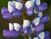 gtb_botanic-4
