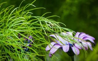 gtb_botanic-5