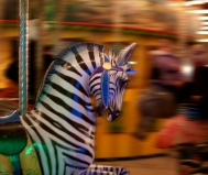 LMS_Zebra
