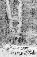 558-16 Frsh Snow Forets Textures