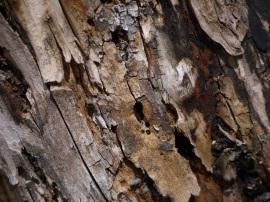 cbovee 4 Weathered wood