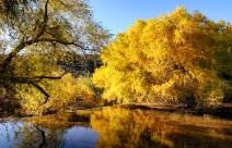 Chuck Hunnicutt - Sabino Canyon-1