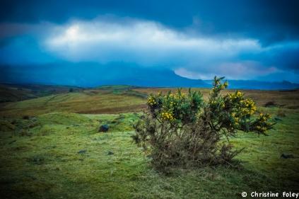 Foley Scotland (8 of 15)