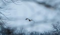 gtb_feb 16 eagle chase