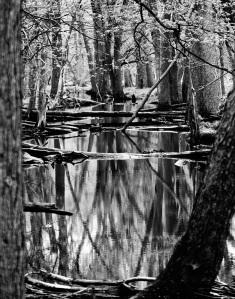 Messenger Woods Reflection