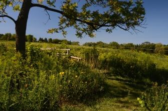 Bill Miotek ~ Schulenberg Prairie Tree
