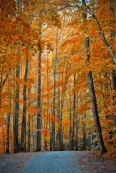 Trees In Red FB -Lawrence Golla