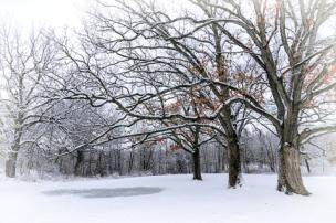 Chuck Hunnicutt ~ Winter Snow
