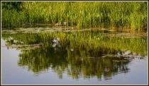Bill Pehrson Wavy Reflection