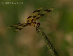 J.Judd-5