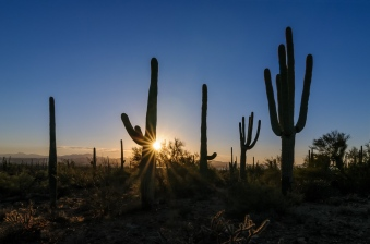 Chuck Hunnicutt - Saguaro NP-7