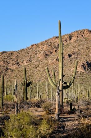Chuck Hunnicutt - Saguaro NP-8