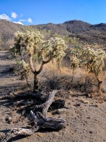 Chuck Hunnicutt - Saguaro NP-9