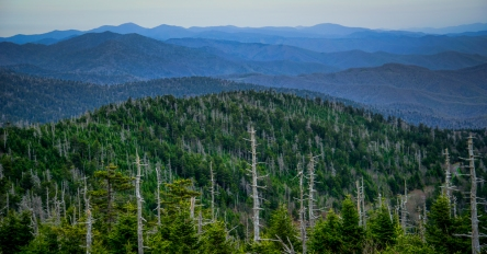 View from Clingman's Dome Tower