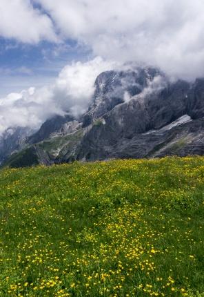 Alpine Meadow near Grosse Scheidegg