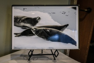 D Scholley Antarctica-3